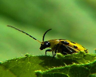 Garden_Pests