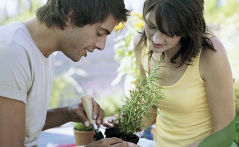 Gardening_Advice