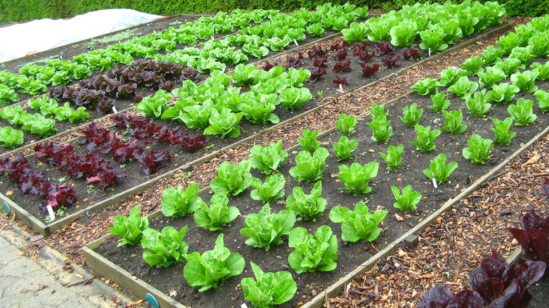 Gardening_Organic